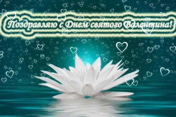 белая лилия на Валентинов день