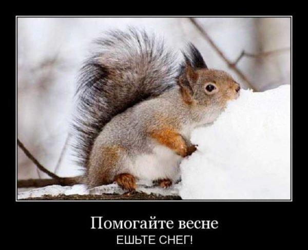 смешной демотиватор про весну
