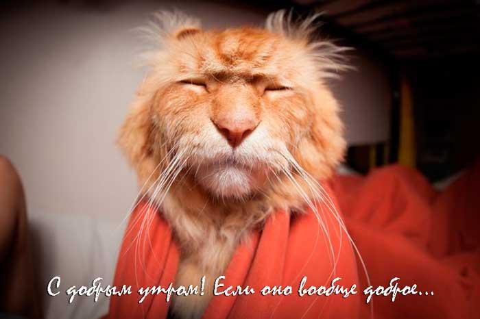 прикольный грустный кот с пожеланиями