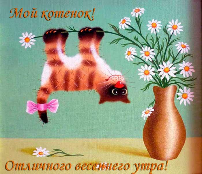 смешной кот и цветы