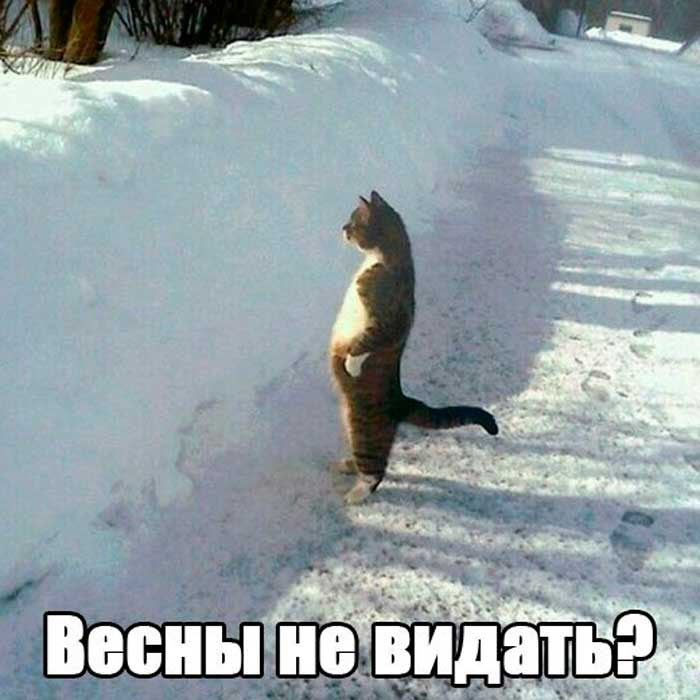 кот встречает весну