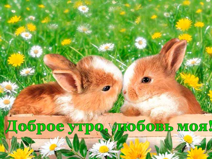 кролики и одуванчики