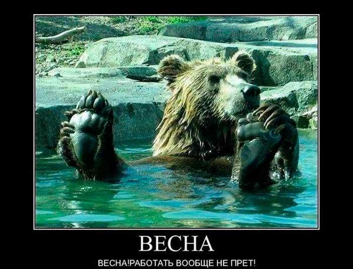медведь про весну