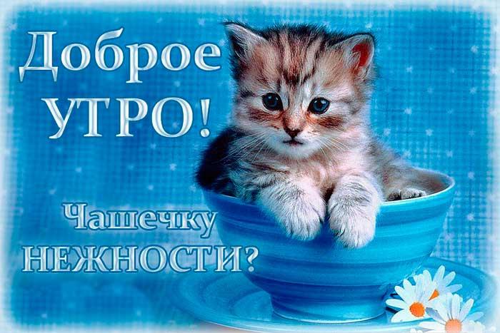 нежная открытка с котенком