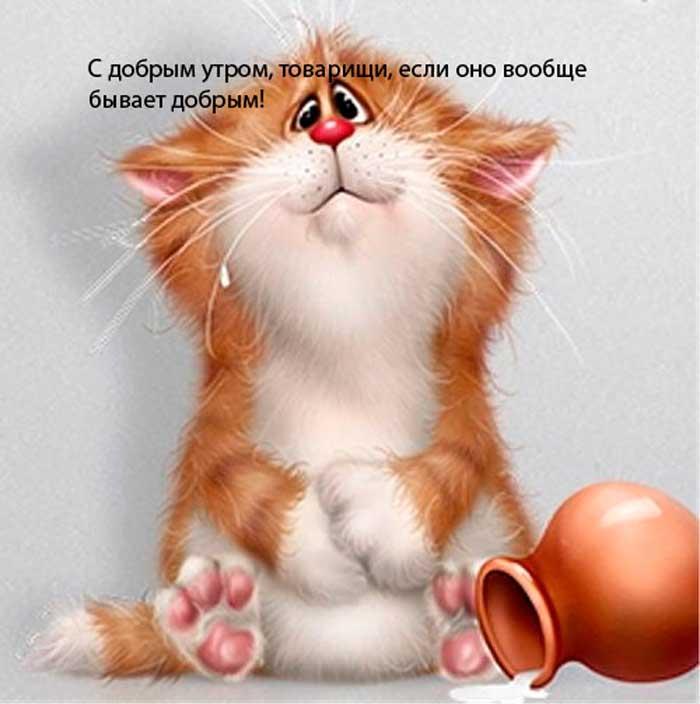 очень смешной кот