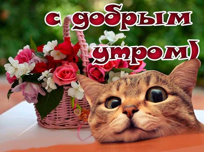 прикольная картинка с добрым утром и котом бесплатно
