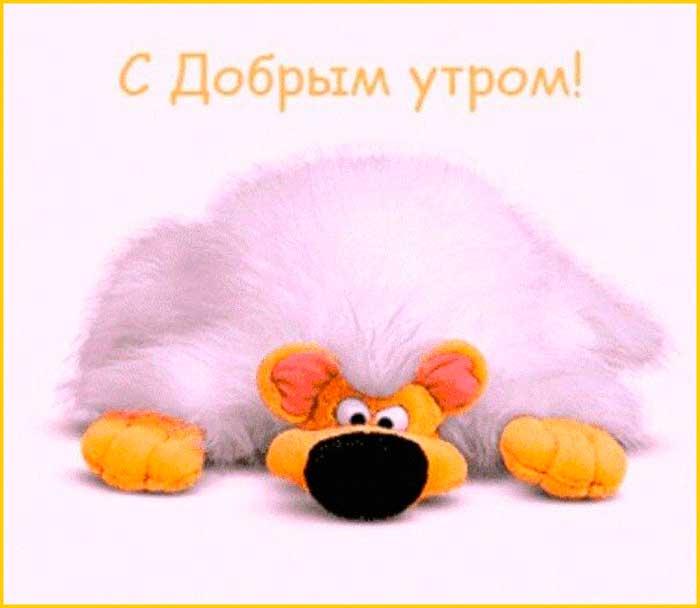 прикольный мишка