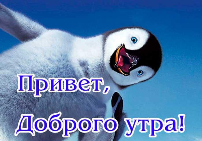 картинка утра доброго с прикольным пингвином