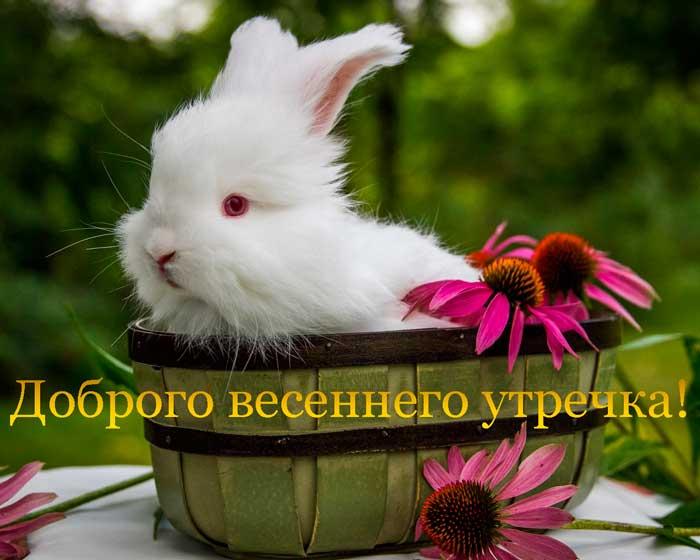 прикольный зайчонок