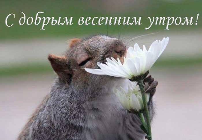 прикольный зверек с цветком