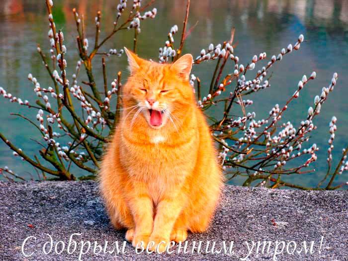 прикольный кот с пожеланием доброго утра