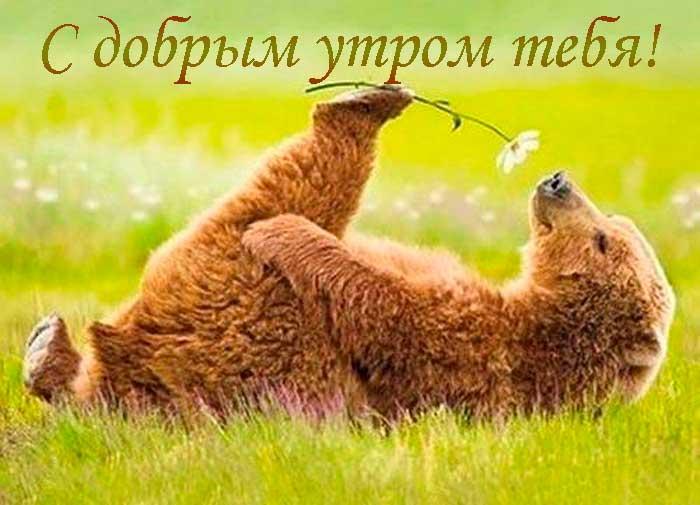 смешной медвежонок
