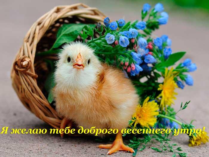 смешной цыпленок