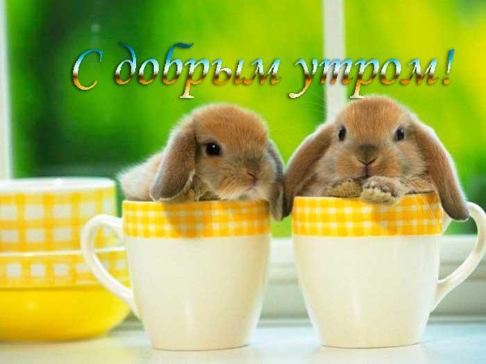 смешные крольчата