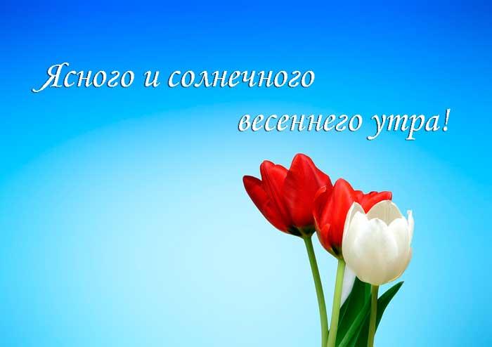тюльпаны и пожелание чудесного утра
