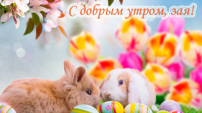 зайчата и цветы