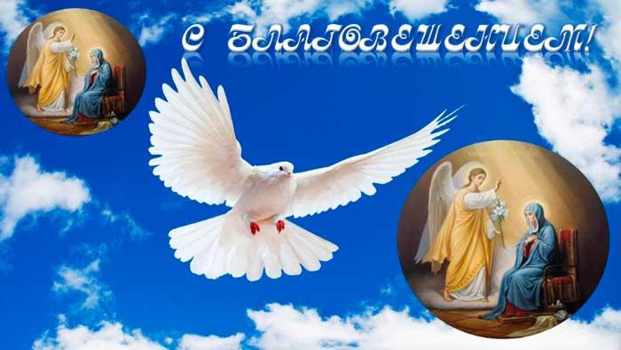 голубь с благой вестью