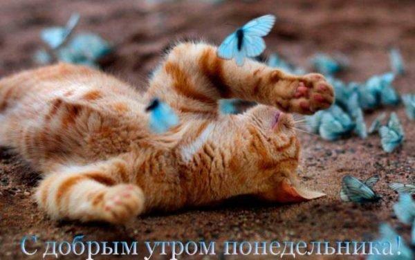 кот и бабочки
