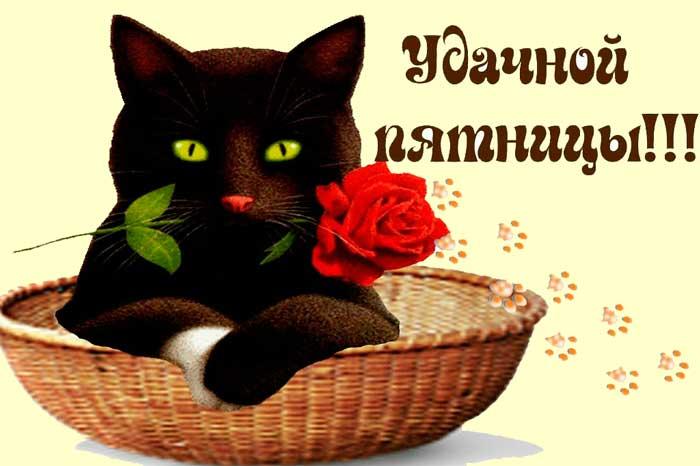 кот и роза