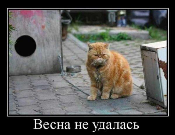 короткий анекдот про весну и кота