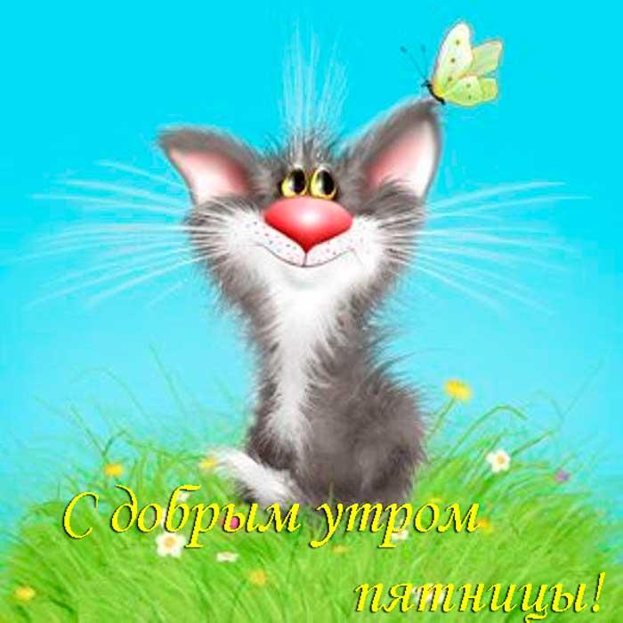 кот с пожеланием доброй пятницы