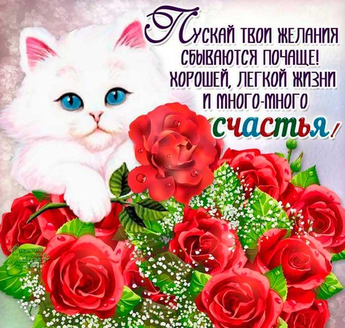 котенок и розы