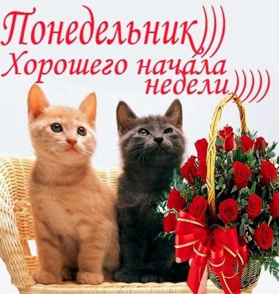 коты и розы