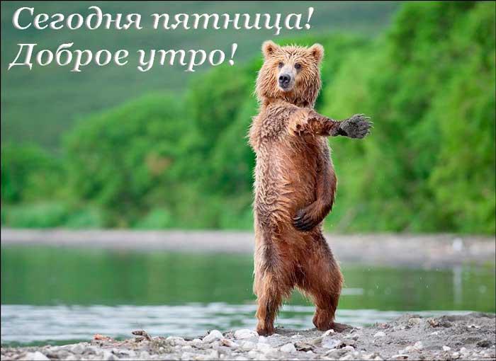 прикольный медведь