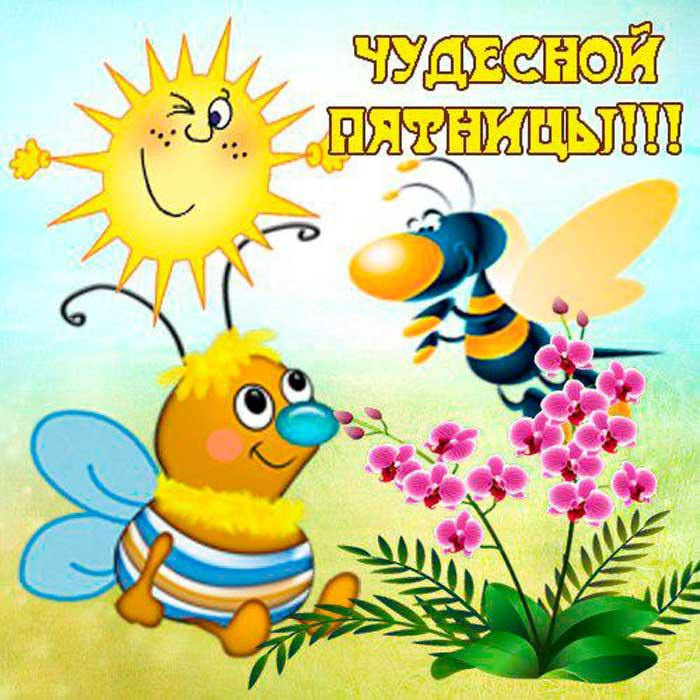 прикольные пчелки