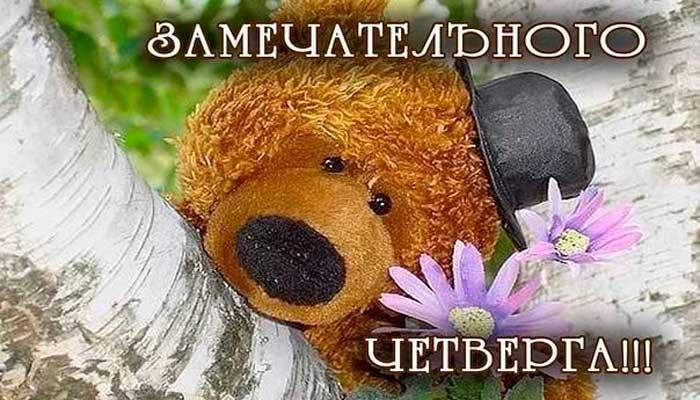 прикольный медвежонок