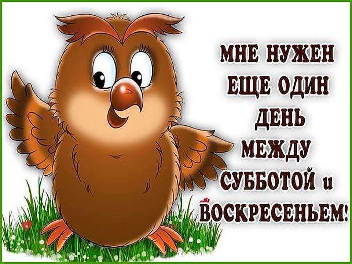 смешная сова