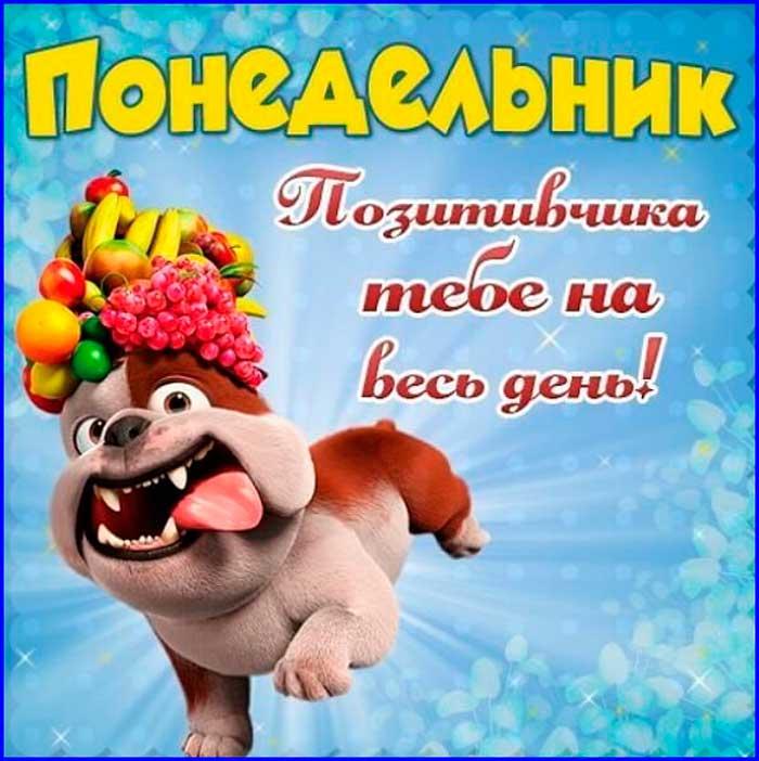 смешной пес с пожеланием позитива в понедельник