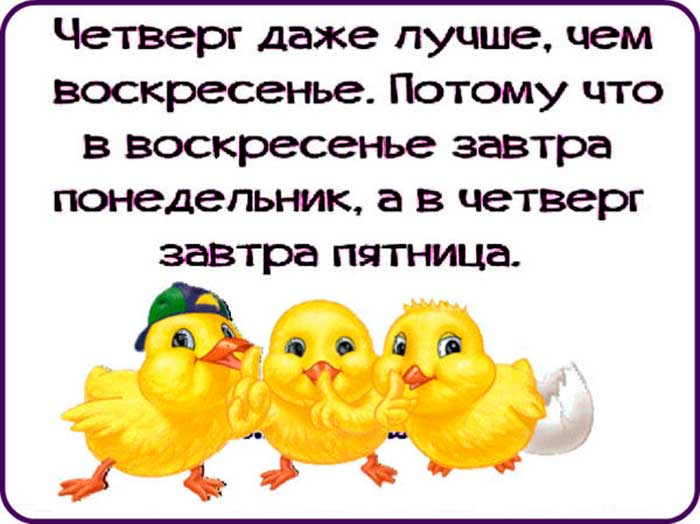 смешные цыплята