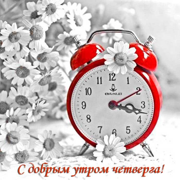 цветы и будильник