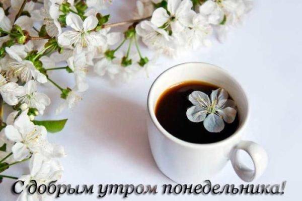 цветы вишни и кофе