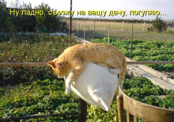 кот на даче