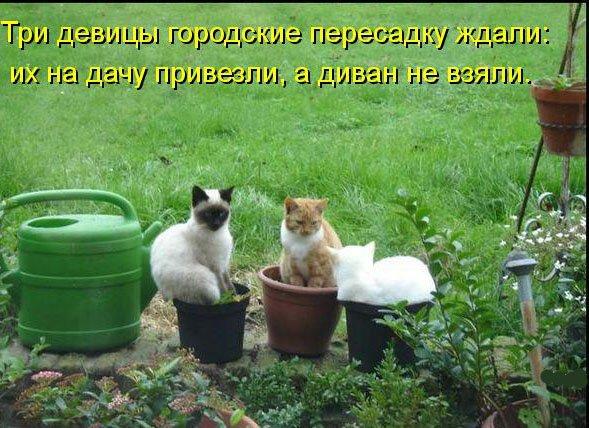 три прикольных кошки на даче