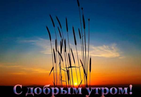 восход солнца над лугом