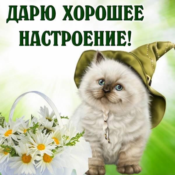 прикольный котенок с цветами