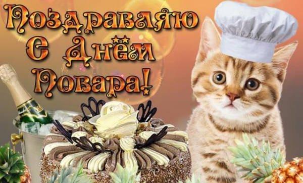 котенок-повар