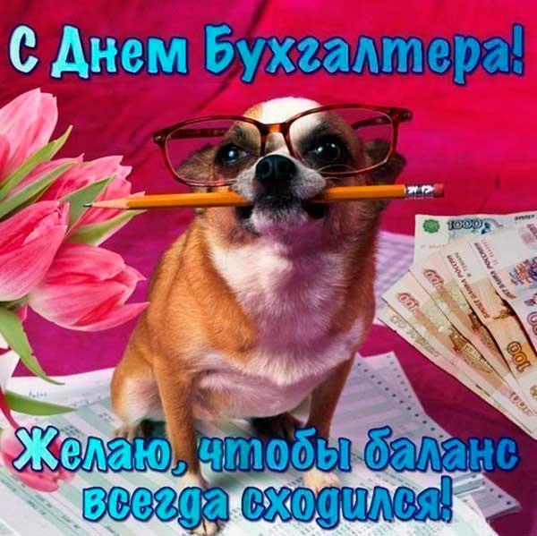 смешная собака с поздравлением