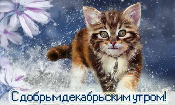 смешной котенок и снежинки