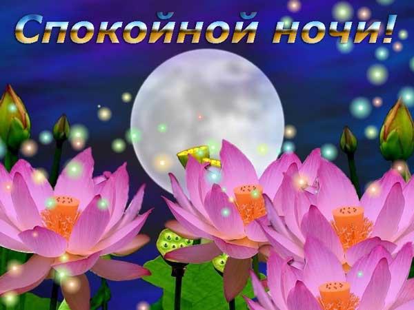 лилии ночью