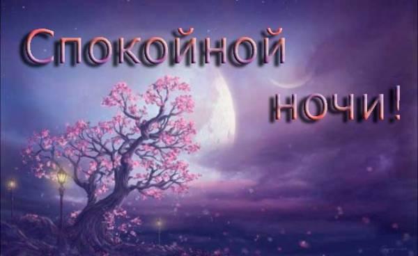 цветущая сакура в лунном свете