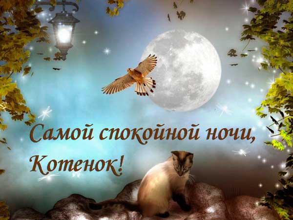луна и кошка