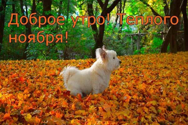 смешная собака на утренней прогулке