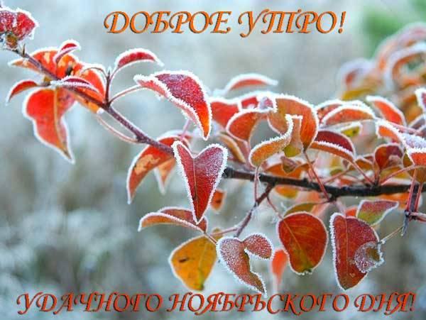 картинка доброго утра ноября и хорошего дня