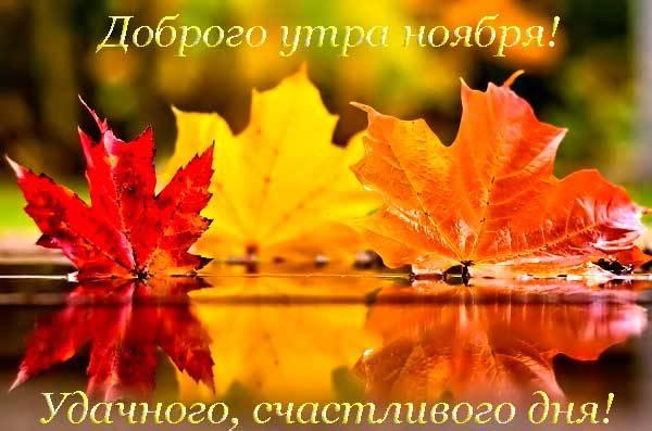 листья в ноябре