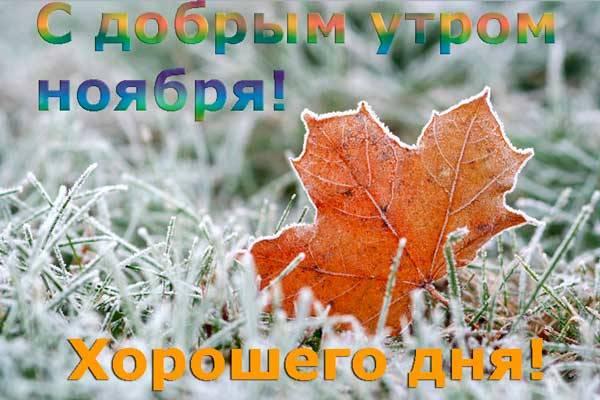 лист клена в снегу