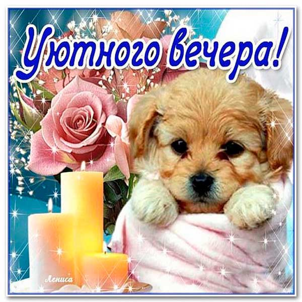 щенок с пожеланием доброго вечера